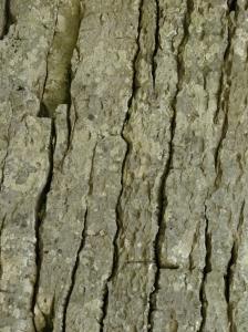 rock-texture